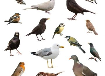 הכרה וזיהוי ציפורים