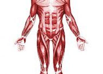 שאלון מקוון בנושא מערכת השלד ומערכת השרירים בגוף האדם